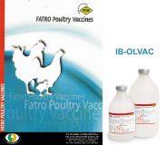 IB-OLVAC